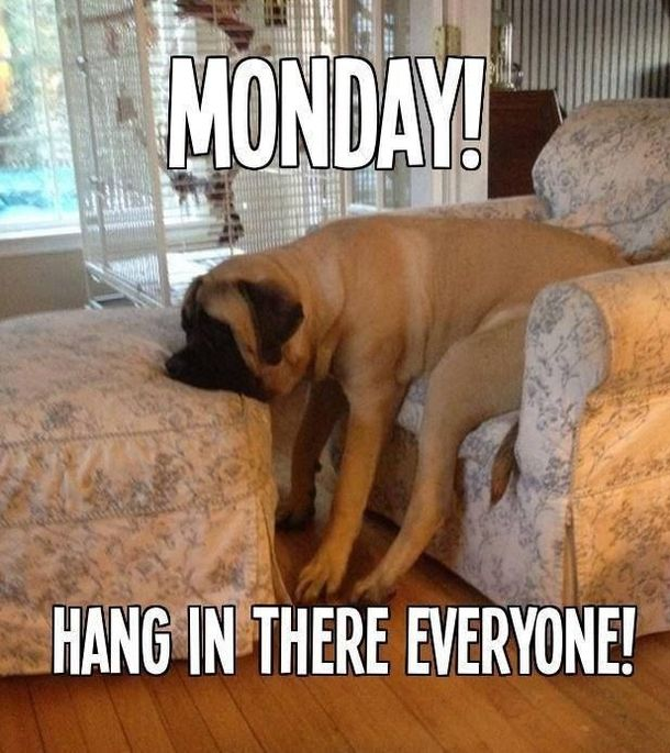 Yes its monday again mondays can be rough but we have funny happy yes its monday again mondays can be rough but we have 50 funny altavistaventures Image collections