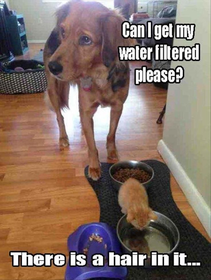 Funny Animal Picture Dump