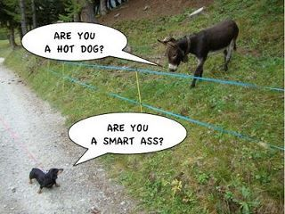 funny dachshund pictures with captions | Friday Funny: And then the Dachshund said to…