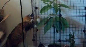 "#cats "" #cats #shaming "" #shaming #animals "" #animals #humor explore…"