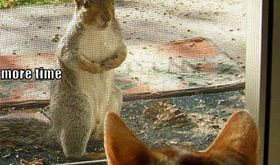 funny caption squirrel tells cat not to chase ducks