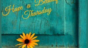 Have a beautiful Thursday! 