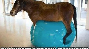 Hilarious Horse Memes That Will Make You Laugh All Day