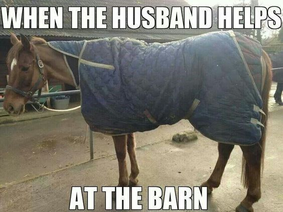 Funniest Horse Memes In The Barn