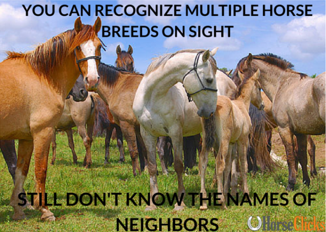 Recognizing horse breeds on sight but still not knowing the names of the lol!…