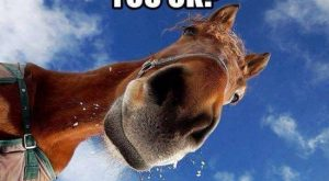 Hilarious Horse Memes | The Original Mane 'n Tail – Animal Care – The…