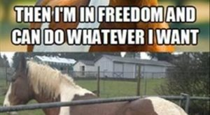 "Well, that didn't work out as #horses ""> #horses #humor ""> #humor…"