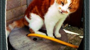 Funny Cat Photos with Captions Ginger Cat