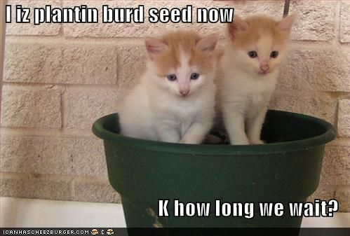 Funny Cat Pictures With Captions, Top Cat Care Tips And Advice To Help You…