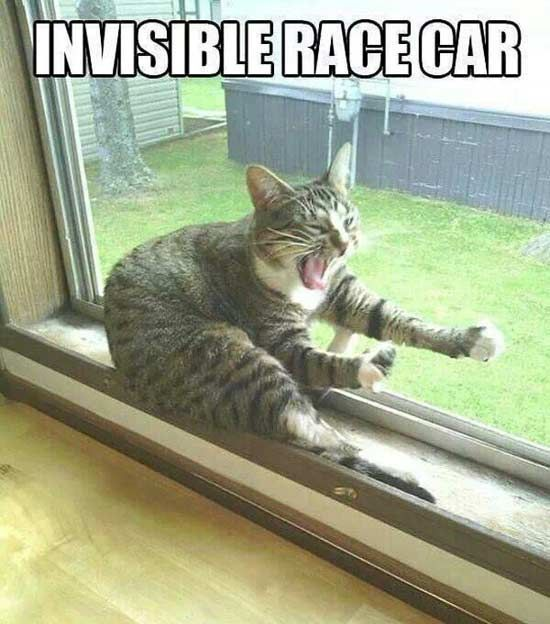 Funny Cats :  Funny Cat Photos with Caption