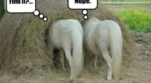 funny pony whith captins | funny – horse pictures with captions