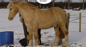 Funny Horse Slogans | related searches for funny horse pictures with captions funny horse…