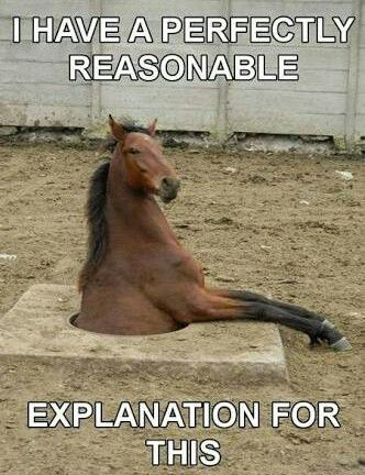 funny horse pictures with captions