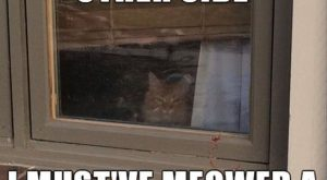 + Funny Cat Pictures with Captions