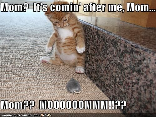 Image of: Meme Really Funny Cats With Captions Very Cool Funny Cat Pictures With Captions funnycatsfailsu2026 Hilarious Pets Pictures Really Funny Cats With Captions Very Cool Funny Cat Pictures With