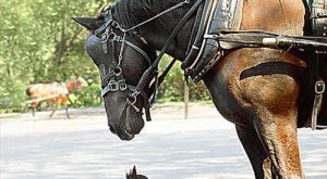 Funny Horse | See Top  Funny Horse Humor Pictures in worlds