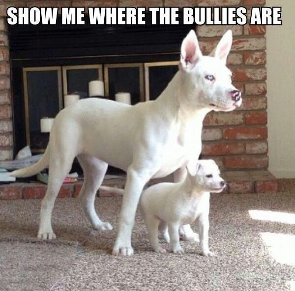Funny Dogs with Captions | Description from Funny Dog Pictures With Captions wallpaper :…