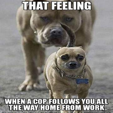 Really Funny Dog Memes – Funny Dog Pictures