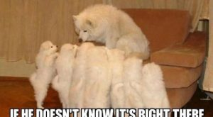 33 All Time Best Funny Dog Pictures with Captions – The Wondrous
