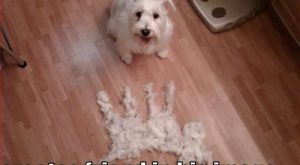 funny pet pictures with captions | Funny dogs with captions Funny Dogs -Funny dog…