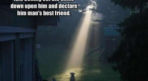 funny dog pics with captions | Funny Picture Clip: Funny dog pictures with captions…
