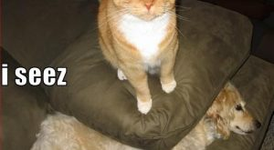 cat captoins | Very funny dog pictures with captions 'n' funny dog picture