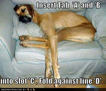 funny dog pictures with captions 2013 | Funny Dog Pictures with Captions Wallpaper
