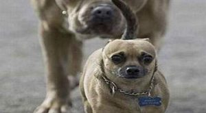 23 Really Funny Dog Memes – Funny Dog Pictures #compartirvideos search Pinterest&#82...