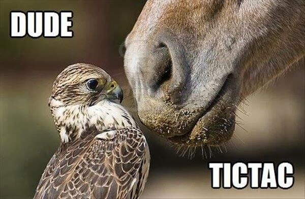 Funny Horse Pictures with Captions |  Funny animal captions – part  (…