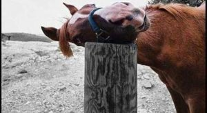 Just a horse and his post OMG! Lol