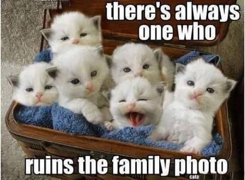 Funny Kid Friendly Cat Memes : Theres always one who ruins the photo funny memes animals cats