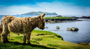 "The scottish highland cow's donkey cousin … Today is #fun ""> #fun day.…"