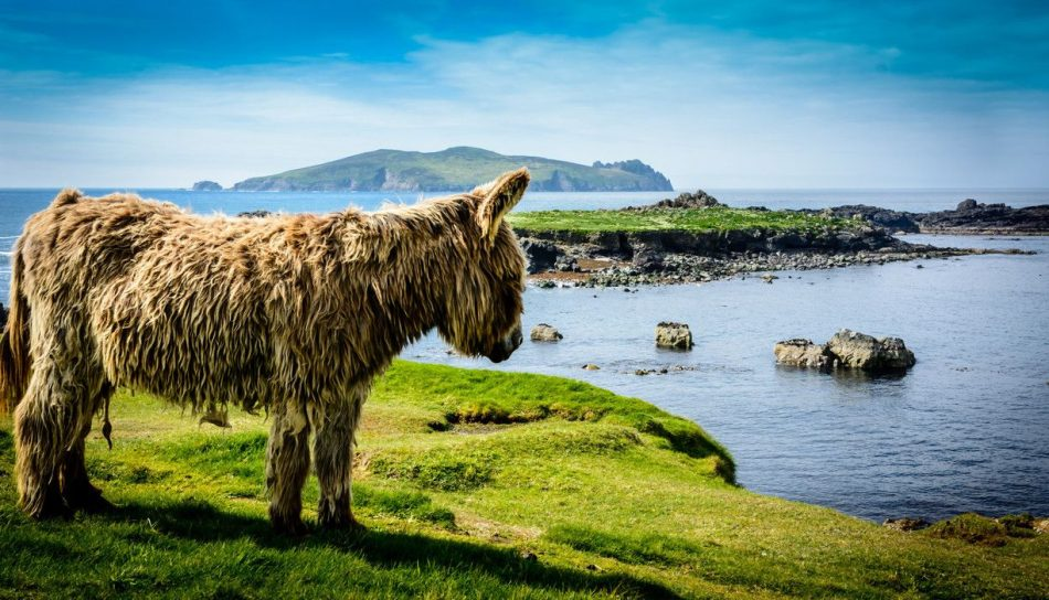 """The scottish highland cow's donkey cousin … Today is #fun """"> #fun day.…"""