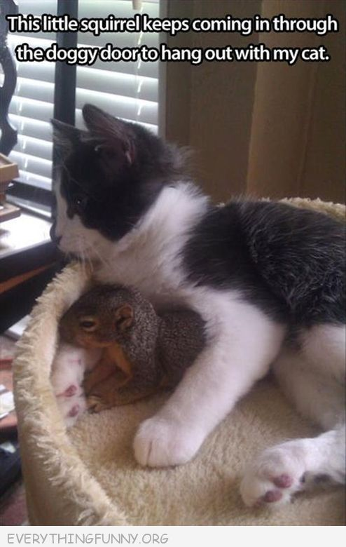 funny caption pictures squirrel comes in every day to hang out with my cat