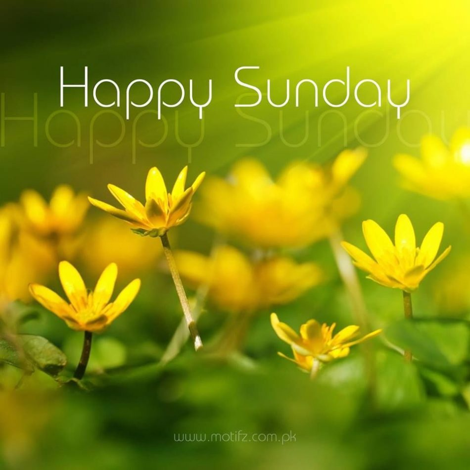 yellow happy sunday flowers fit for fun