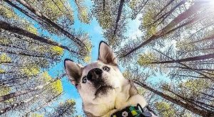 """What a gorgeous shot …"" #siberianhusky explore Pinterest""> #siberianhusky"