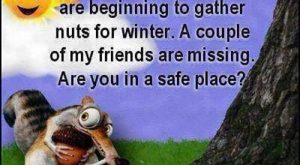 Autumn Humor: I've noticed the squirrels are beginning to gather nuts for winter. A…