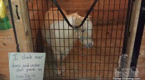 Horse shaming:  Horses who are very ashamed of what they did (but not…