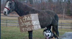 Horses That Are Not Sorry for What They've Done – Horse Shaming -……