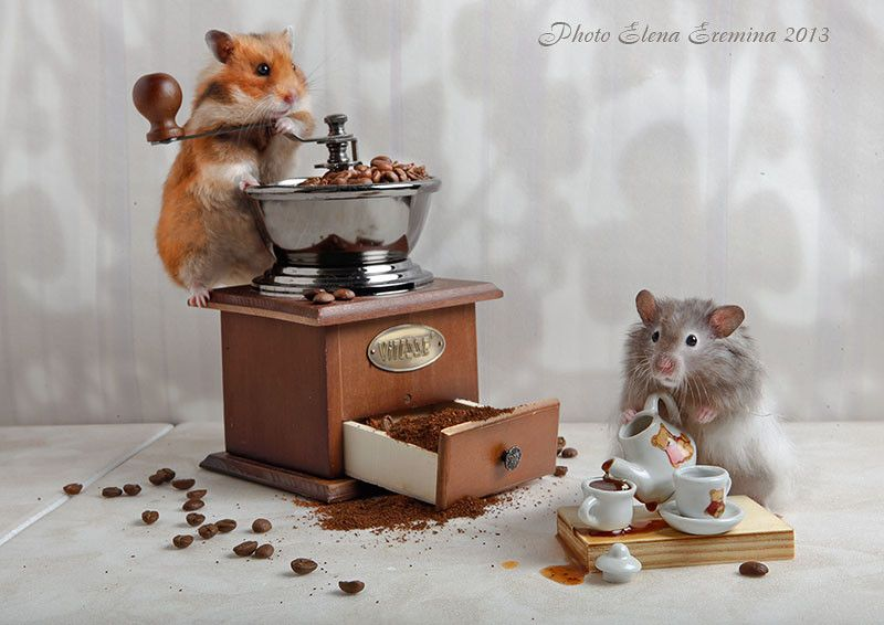 Photo coffee lovers by Elena Eremina on px