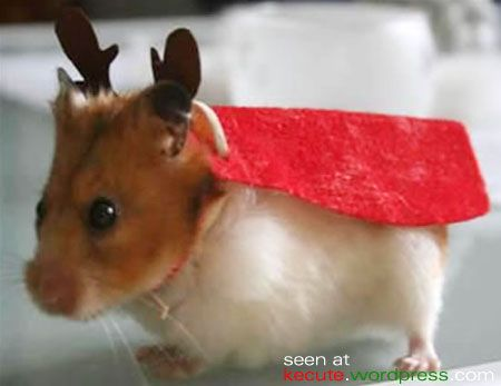 Reindeer hamster. OK, yes, I'm sick – but I'm thinking of our guinea pig...