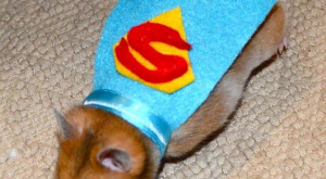 Super Hamster costume, pet costume, pet costume, , Best Halloween costumes for kids, DIY…