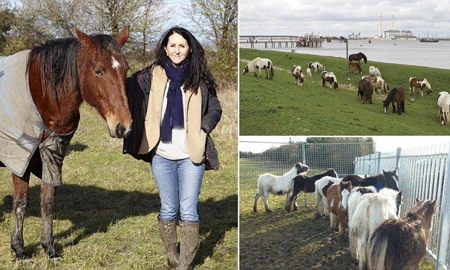 How this starving horse shames middle-class families who dump ponies