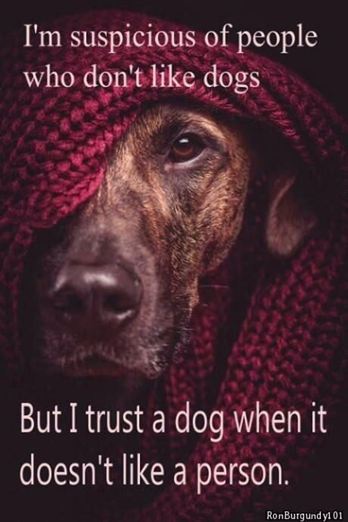 positive quotes that will make you want to hug your pet