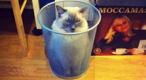 Trashcat watches the enemy // funny pictures – funny photos – funny images -…