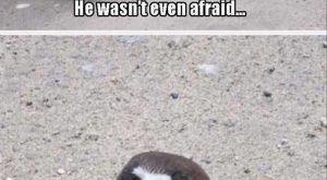 """Funny Animal Pictures Of The Day – 26 Pics #funnypics explore Pinterest""""> #..."""