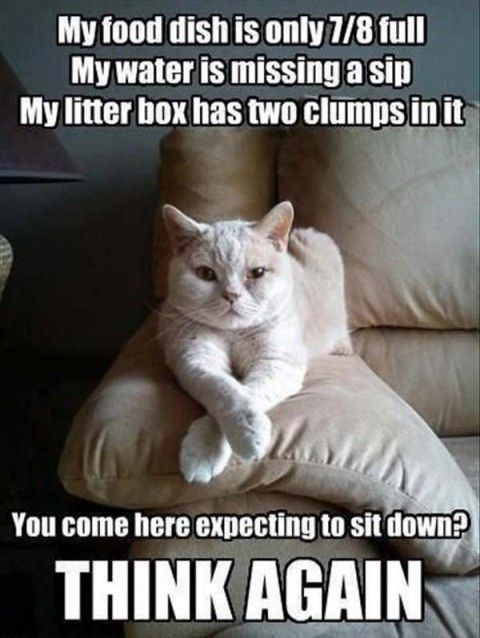 "Top  Funny Animal Pictures and Jokes #images ""> #images with captions"