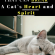 If you value your cats' spirit, you'll want to avoid the following habits. These…