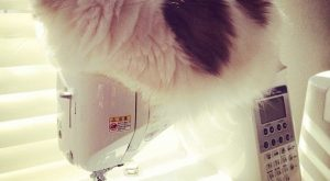 "Cat on my Swing Machine. #cat ""> #cat #sewing ""> #sewing"