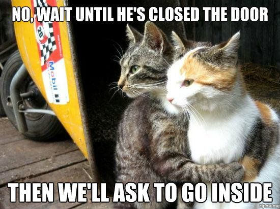 funny animal pictures   What my cat does everyday – No, wait until he's…